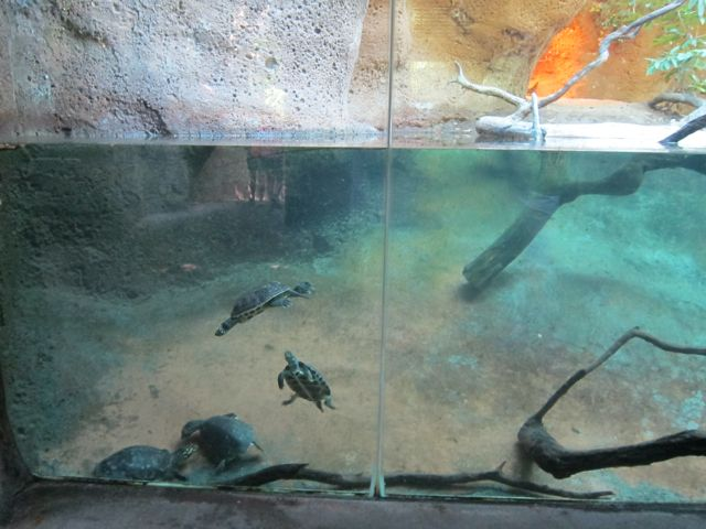 Turtles and gharial
