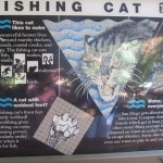Fishing Cat information