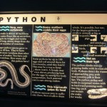 Phython