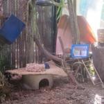 Pygmy Marmoset playground
