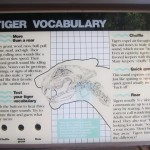 Tiger Vocabulary