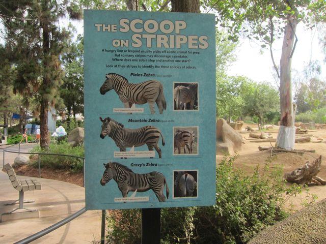 Various Zebras