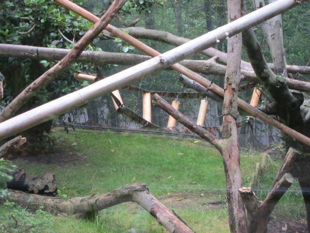 Macaque habitat
