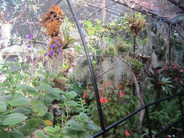 Hummingbird Aviary