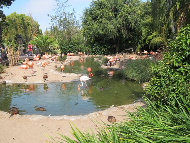 Flamingos at Zoo entrance